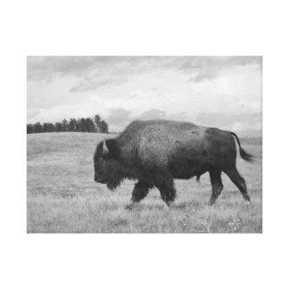 """Onward"" Buffalo Canvas Print"