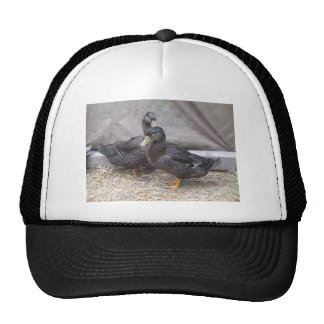 Ooey and Gooey Trucker Hat
