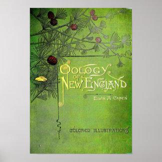 Oology de Nueva Inglaterra 1886 Poster
