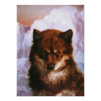Oosisoak Artic Dog Poster