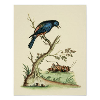 Opal-rumped Tanager Vintage Poster