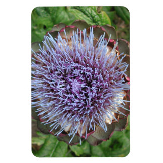 Open Artichoke Flower. Purple. Magnet