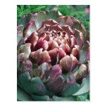 Open Artichoke Plant. Postcard