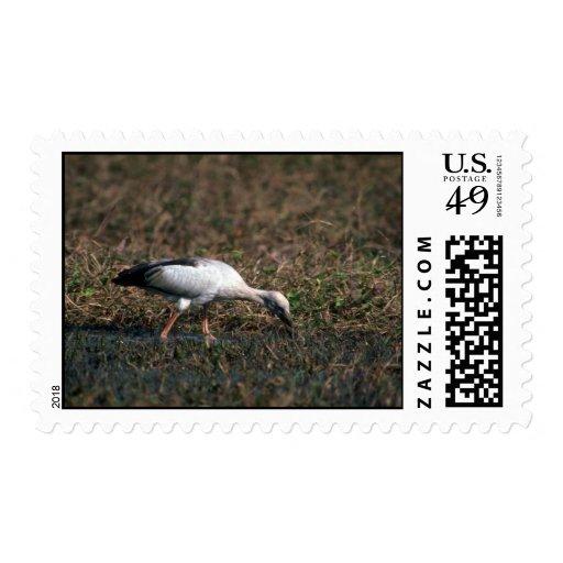 Open-billed Stork Postage Stamps