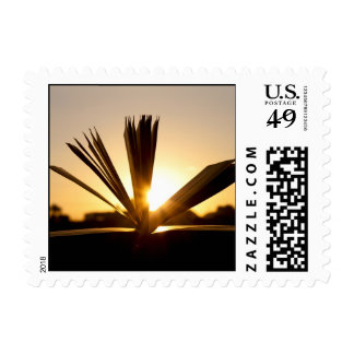 Open Book and Sunset Photograph Postage Stamp