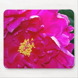 Open Dark Pink Peony