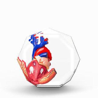 Open model human heart on white background award