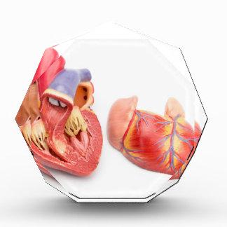 Open model of human heart showing inside.jpg acrylic award