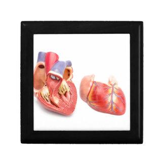 Open model of human heart showing inside.jpg jewelry box
