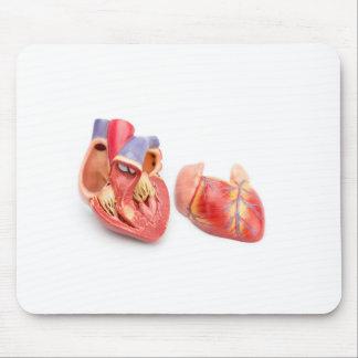 Open model of human heart showing inside.jpg mouse pad