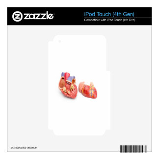 Open model of human heart showing inside.jpg skin for iPod touch 4G