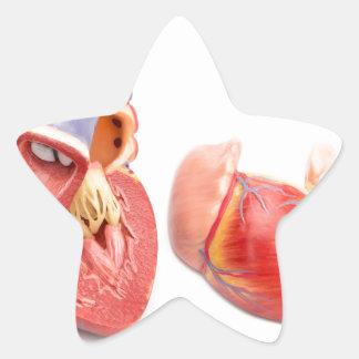 Open model of human heart showing inside.jpg star sticker