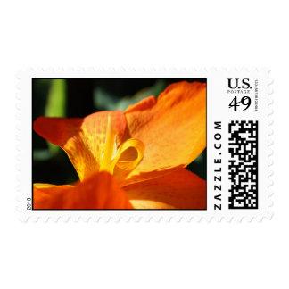 Open Orange Stamp