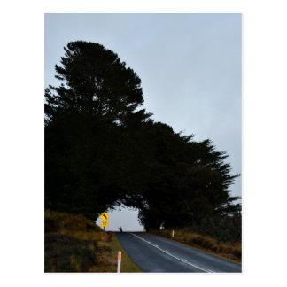OPEN ROAD TASMANIA AUSTRALIA POSTCARD