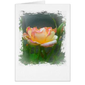 Open Rose Card