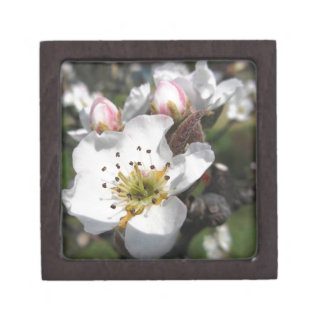 Open white apple flower and closed buds in spring jewelry box