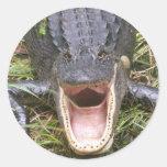 Open Wide! Florida Alligator Classic Round Sticker