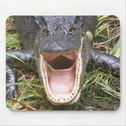 Open Wide! Florida Alligator Mouse Pad