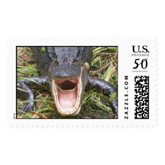 Open Wide! Florida Alligator Postage