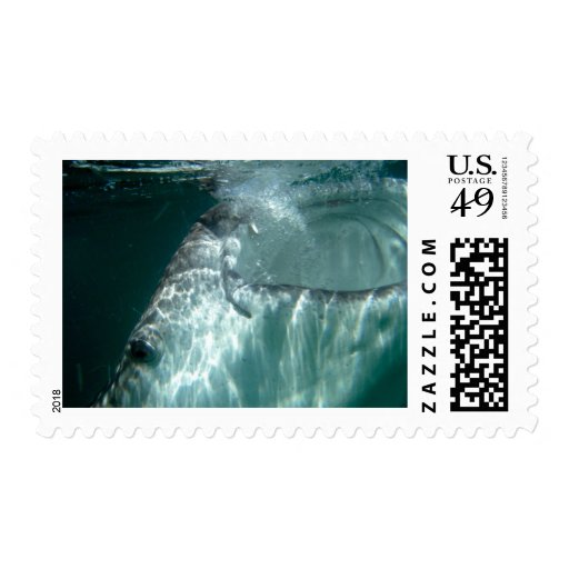 Open Wide! Postage Stamps