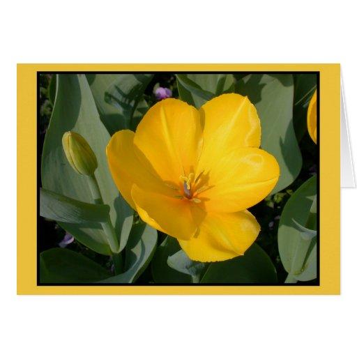Open yellow tulip (tulipa) greeting card