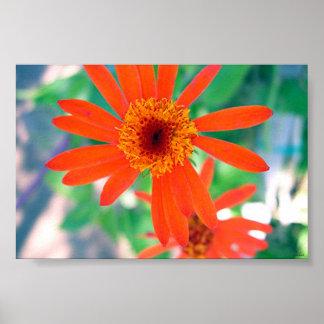 opened flower poster