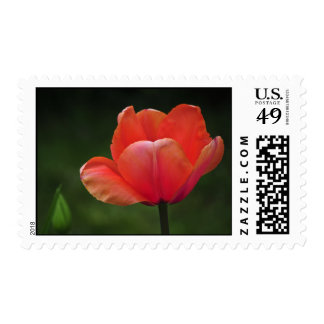 Opened Red Postage Stamp