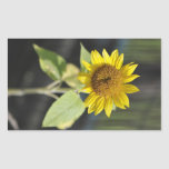 Opened sunflower rectangle stickers