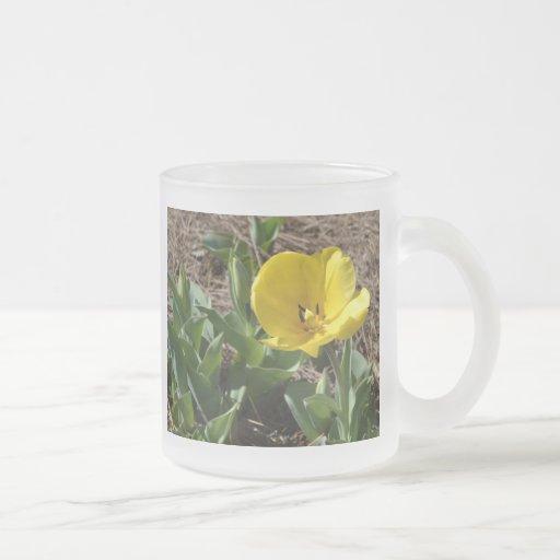 Opened Yellow Daffodil 10 Oz Frosted Glass Coffee Mug
