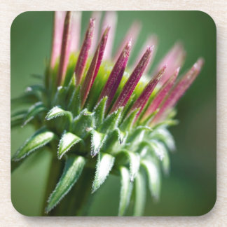 Opening Echinacea Coneflower Blossom Drink Coasters