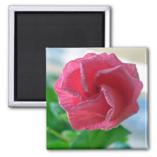 Opening Hibiscus Magnet Refrigerator Magnets