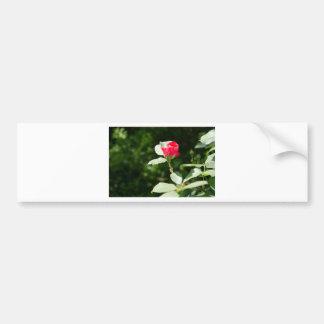 Opening Rosebud Bumper Sticker