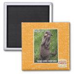 Opera Cat 2 Inch Square Magnet