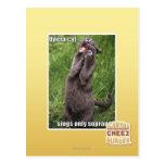 Opera Cat Post Card