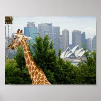 Opera House view from Taronga Zoo Print