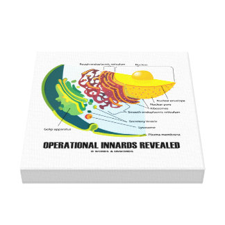 Operational Innards Revealed Endomembrane System Canvas Print