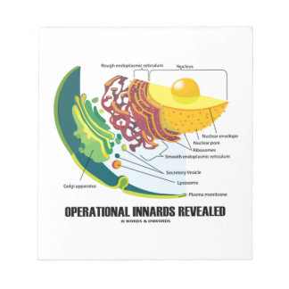 Operational Innards Revealed Endomembrane System Notepad