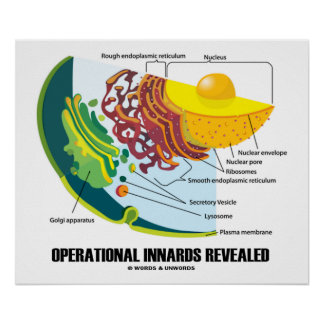 Operational Innards Revealed Endomembrane System Poster