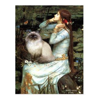 Ophelia - Himalayan cat 7 Postcard