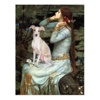 Ophelia - Italian Greyhound 5 Postcard