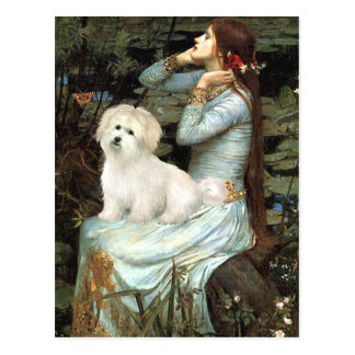 Ophelia Seated - Coton de Tulear 7 Postcard