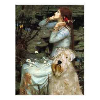 Ophelia - Wheaten Terrier Postcard