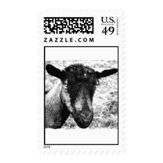 Opinión blanco y negro de la cabeza de la cabra de envio