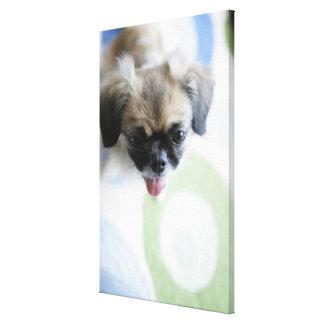 Opinión de alto ángulo un perro esquimal impresiones en lona