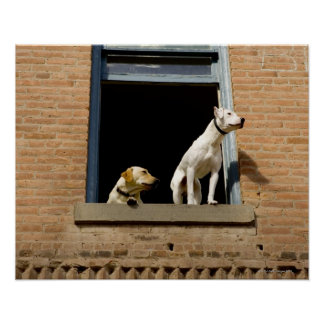 Opinión de ángulo bajo perros en la ventana abiert posters