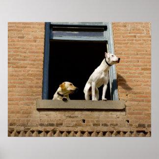 Opinión de ángulo bajo perros en la ventana abiert póster