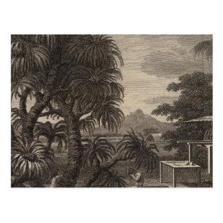 Opinión de Huaheine, Polinesia Tarjeta Postal