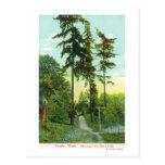 Opinión de la calzada en el parque del arbolado tarjeta postal