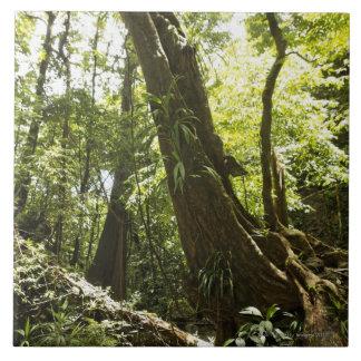 opinión de la selva tropical, Dominica Tejas Cerámicas