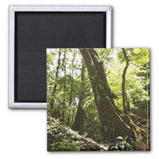 opinión de la selva tropical, Dominica Imán Cuadrado